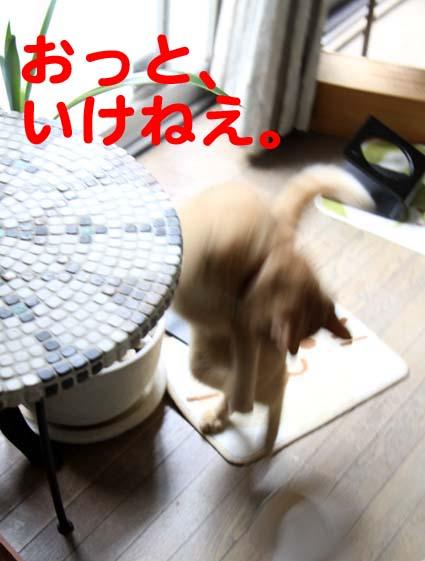 110903_立ち食い4.jpg
