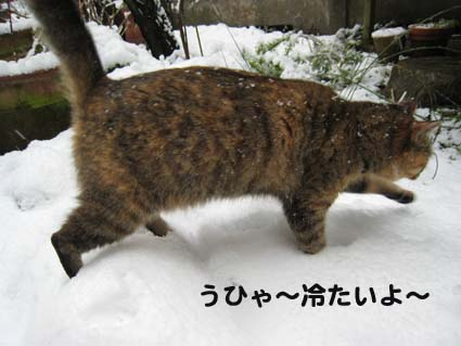 120126_雪1.jpg