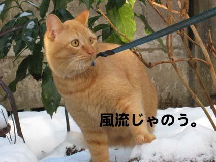 120126_雪4.jpg
