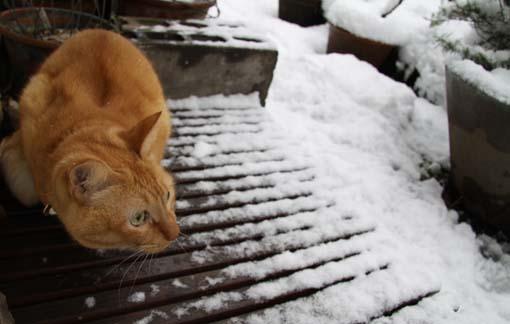 130115_雪4.jpg