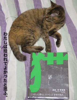 130530_武田2.png