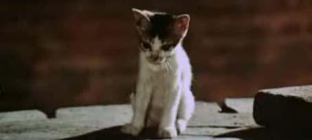 140711_ドラゴンへの道の猫.jpg