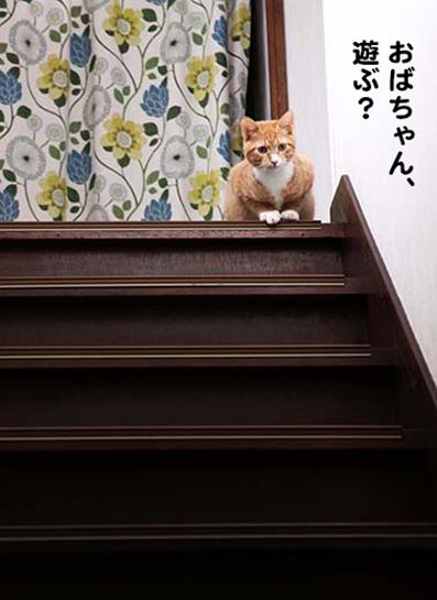 151213_タビ階段.png