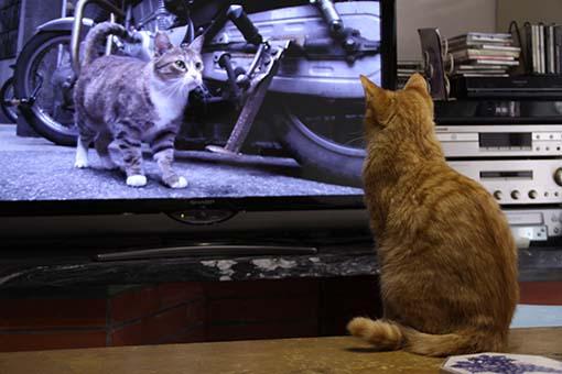 160302_たびテレビ.jpg