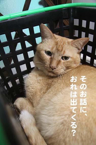 141210_かごドラ.png