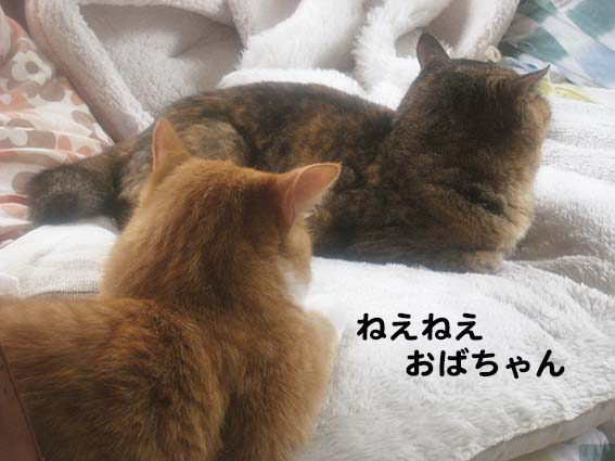 160323_ねえねえ1.png